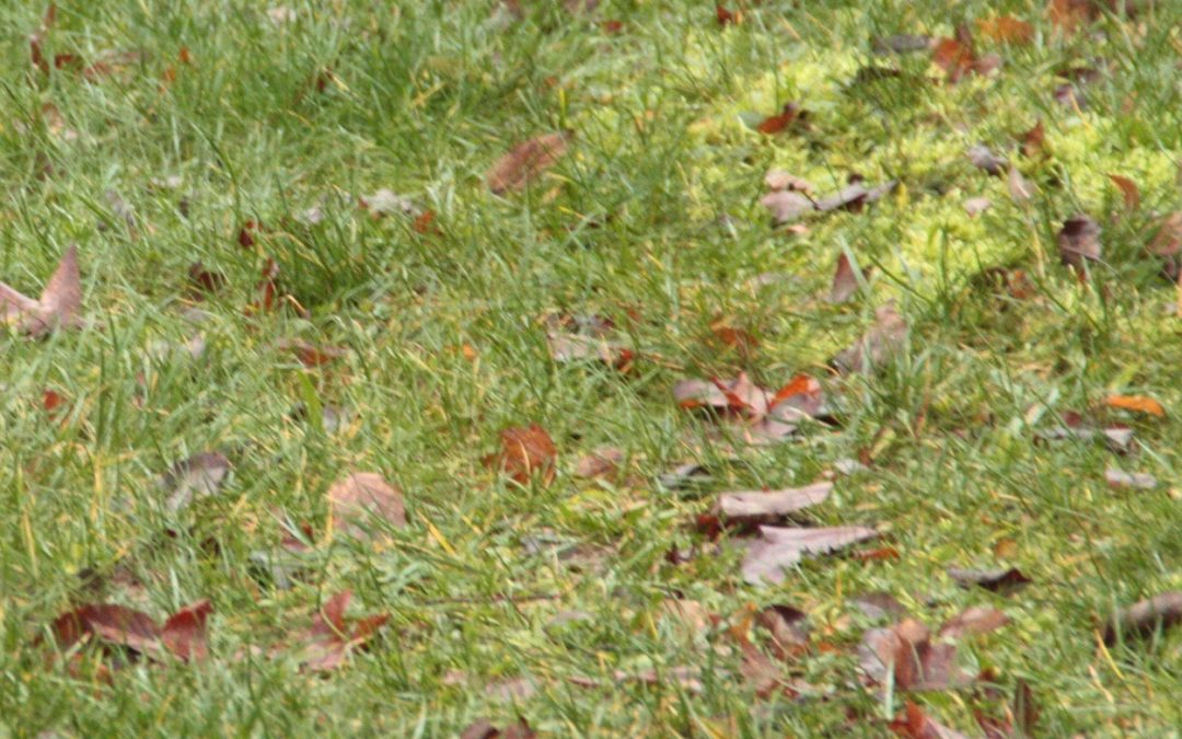 Garten & Herbst